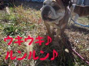 01日 お散歩 (1)