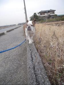 03日 お散歩 (20)