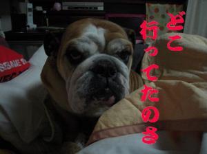 26日 ふて寝ピン子 (3)