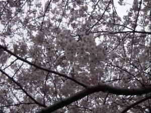 05日 花見でえと (15)