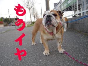 07日 お散歩 (10)