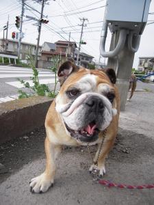 01日 お散歩 (2)