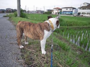 01日 お散歩 (18)