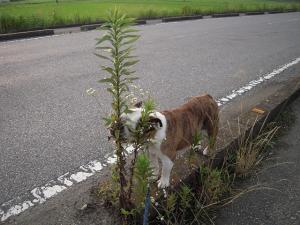 25日 お散歩 (15)