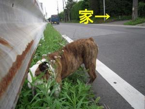 03日 お散歩 (2)