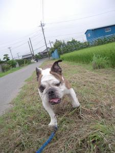 04日 久々のお散歩 (7)
