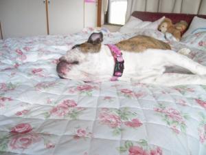 21日 ウメピン on ベッド (6)