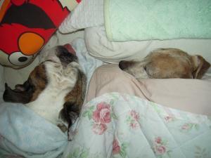 15日 寝犬 (3)