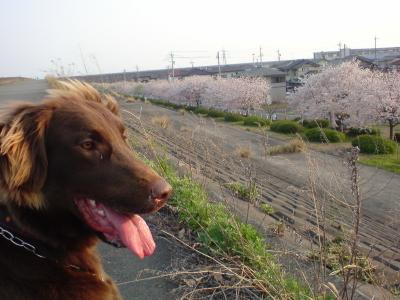 09sakura1.jpg