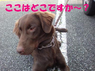 081119譛晞悸・ア・假スー・・4_convert_20081126205456