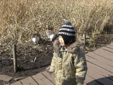 hitenkun with ducks
