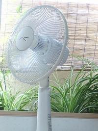 扇風機 観葉植物 夏