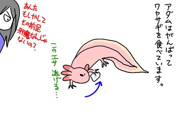 20110923ワカサギ_fc2