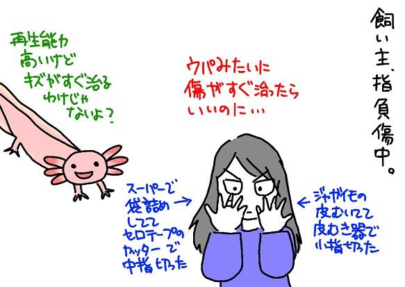 20110927負傷_fc2