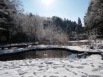 白い裏山の沼