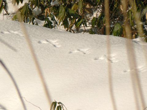 080119 ウサギの足跡