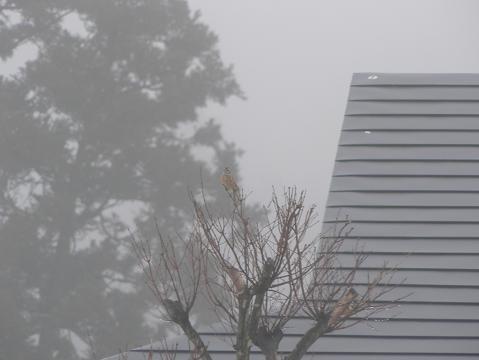 080316 濃霧