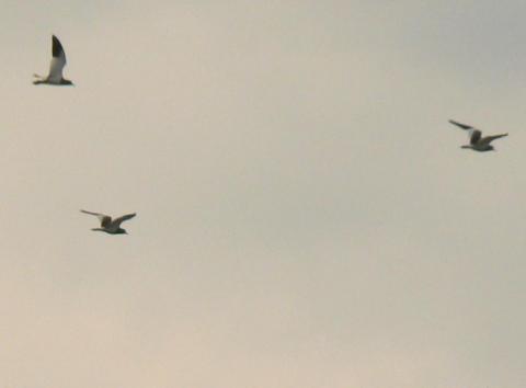 080316 謎の鳥2