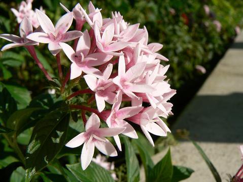 '08ハワイ 0629花