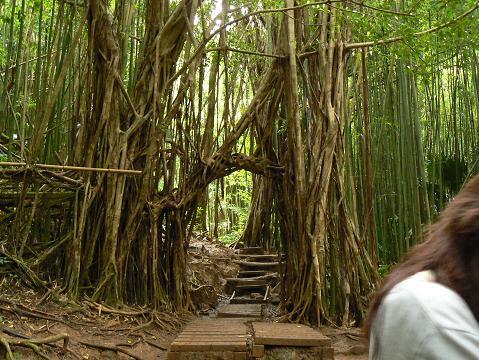'08ハワイ 0627マノア滝ツアー:トンネル