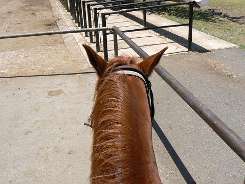 '08ハワイ 0628クアロア牧場:乗馬1(馬名ラティーノ)
