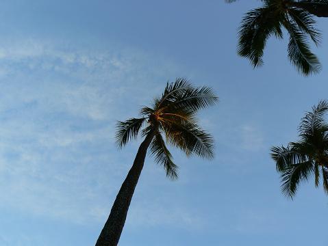 '08ハワイ 0626ヒルトン前のビーチ3