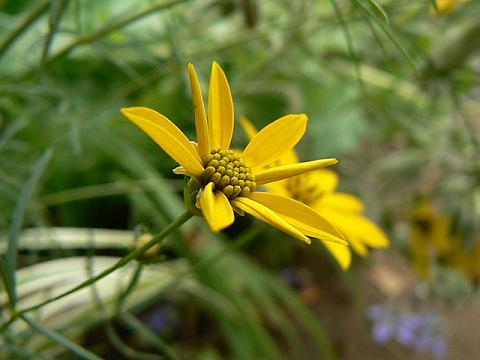080712 庭の花1