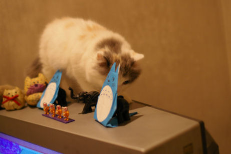 IMGP5790ー猫