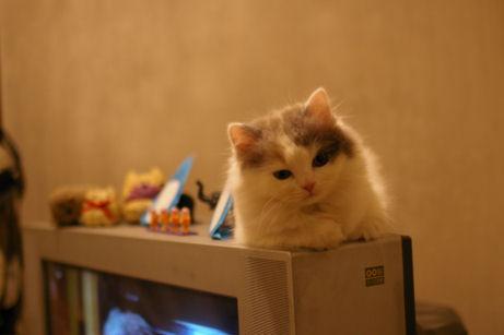IMGP5796ー猫