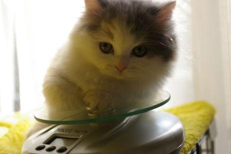 IMGP5772ー猫