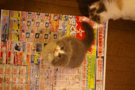 IMGP5883-猫