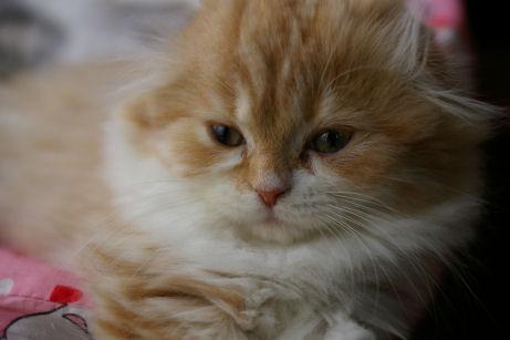 IMGP5951ー猫