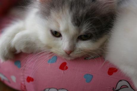 IMGP5953ー猫
