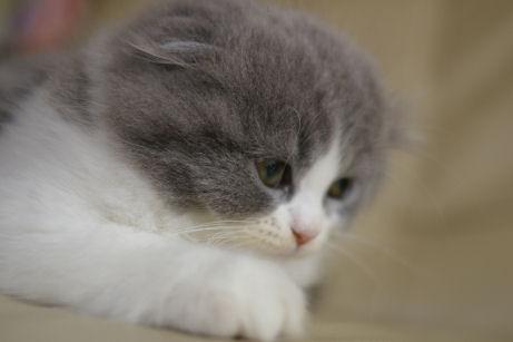 IMGP5854ー猫