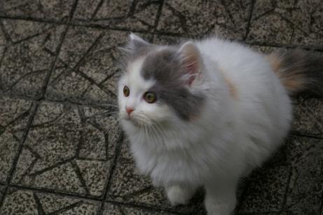 IMGP5997ー猫
