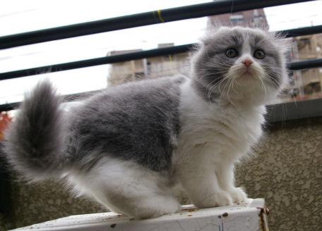 IMGP6003ー猫