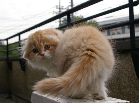 IMGP6004ー猫