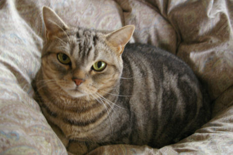 IMGP6009ー猫