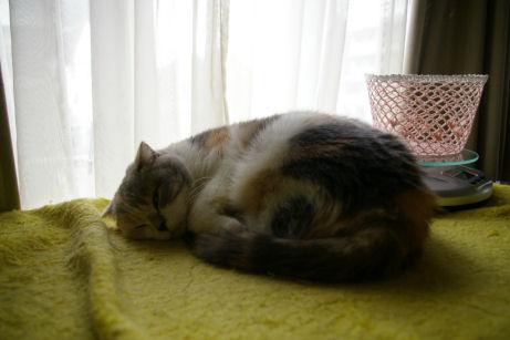 IMGP6010ー猫