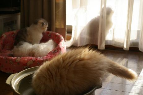 IMGP6076ー猫