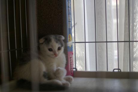 IMGP0718-猫