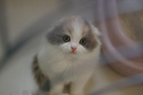 IMGP0721ー猫