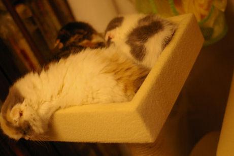 IMGP0779ー猫