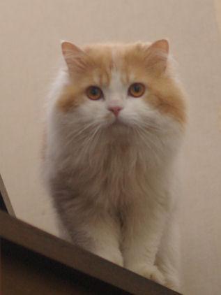 IMGP0832ー猫