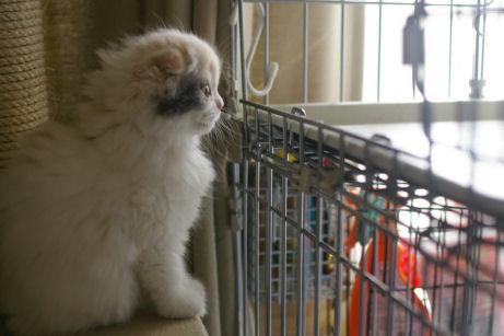 IMGP0871ー猫