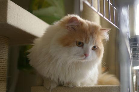IMGP0931ー猫