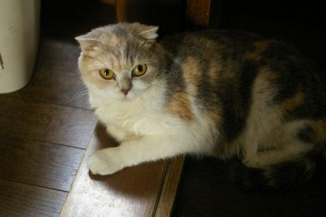 IMGP0933ー猫
