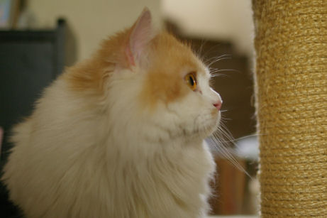 IMGP0937ー猫