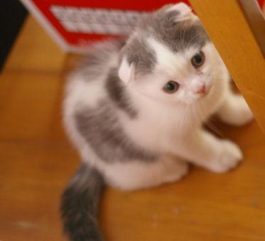 IMGP0938ー猫