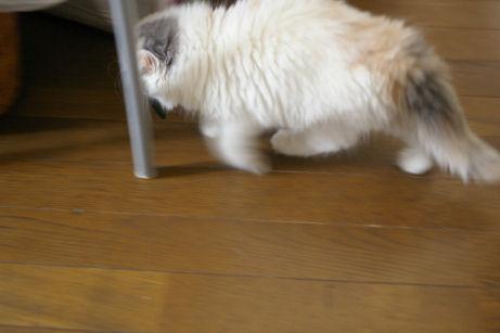 IMGP0946ー猫